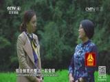 《走遍中国》 20170111 中华蜂保卫战