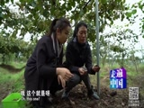 《走遍中国》 20170112 4集系列片《生态淳安》(3)一位韩国人的绿色农业梦