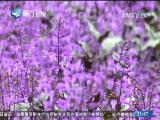 东南亚观察 2017.1.14 - 厦门卫视 00:10:58