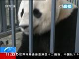 """四川:海归大熊猫""""宝宝""""搬入新家"""