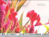 厦视直播室 2017.6.3 - 厦门电视台 00:49:14
