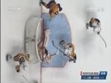 [NHL]总决赛:企鹅1-4掠夺者 比赛集锦