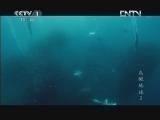 《魅力纪录》 20121002 鸟瞰地球 第二集 非洲
