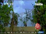 平辽王(27) 斗阵来讲古 2019.01.22 - 厦门卫视 00:30:14