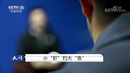 """《天网》 20190130 小""""虾""""钓大""""鱼"""""""