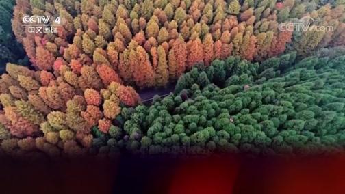 5集系列片《森林城市》(4) 绿色保卫战 走遍中国 2019.02.08 - 中央电视台 00:25:51