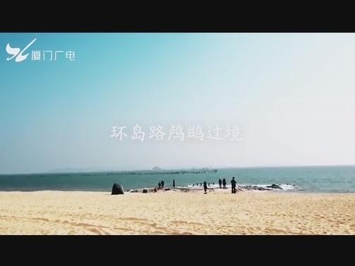 """超震撼!#厦门 环岛路海域惊现鸬鹚""""大军"""",群鸟共舞,你来吗? 00:00:33"""
