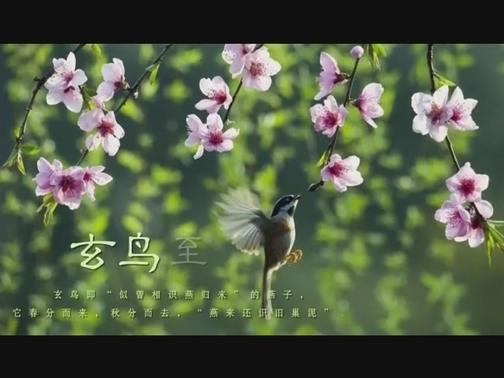 节气 | 春分 00:00:29