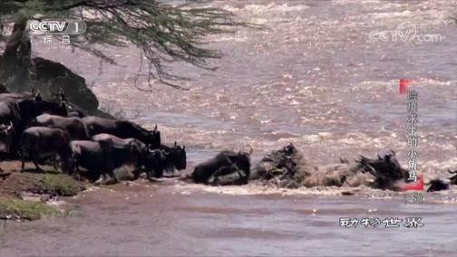 动物世界:险境求生的小角马