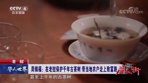 唐人街 老挝 周锦福:在老挝保护千年古茶树 带当地农户走上致富路 华人世界 2019.03.22 - 中央电视台 00:04:59