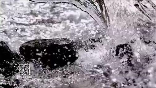 桂平味道(三)水中的厚赠 00:38:47