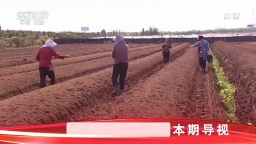 [科技苑]杀虫 改土 让生病的土壤康复 20190409