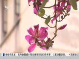 厦视新闻 2019.04.16 - 厦门电视台 00:25:02