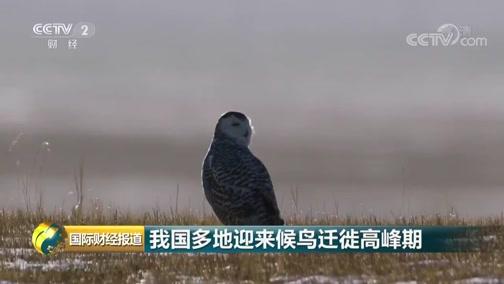 [国际财经报道]我国多地迎来候鸟迁徙岑岭期