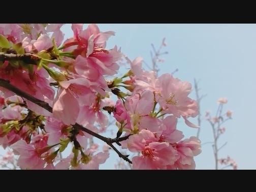 樱花树下的女孩 00:00:57