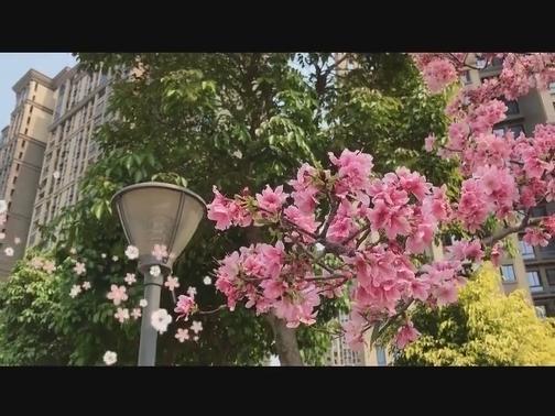 【微拍廈門】樓宇留香 00:00:39