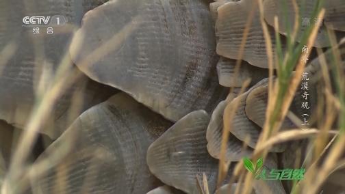 [人与自然]它是地球上唯一浑身长满鳞甲的哺乳动物