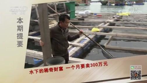 《致富经》 20190524 水下的稀奇财富 一个月要卖300万元