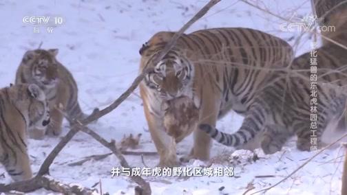 《人物》 20190524 野化猛兽的东北虎林园总工程师