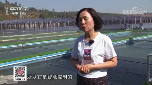 《科技苑》 20190627 太阳能 流水槽 养鱼简单更高效