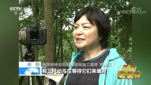 [新闻袋袋裤]陕西洋县:野生朱鹮繁育优于往年