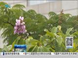 特区新闻广场 2019.07.03 - 厦门电视台 00:22:39