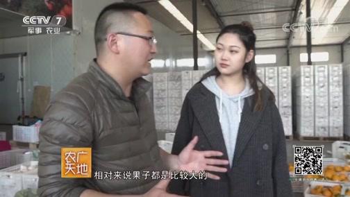 《农广天地》 20190729 一甜遮百丑 高山茶飘香