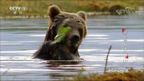 《动物世界》 20190824 熊的森林童话(上)