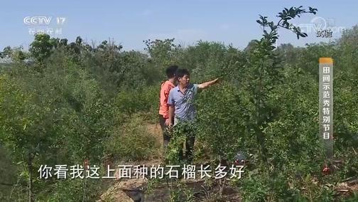 """《田间示范秀》 20190904 不吐籽的石榴有""""钱途"""""""