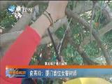 【美丽好厝边】俞燕玲:厦门首位女攀树师 2019.09.04 - 厦门卫视 00:04:45