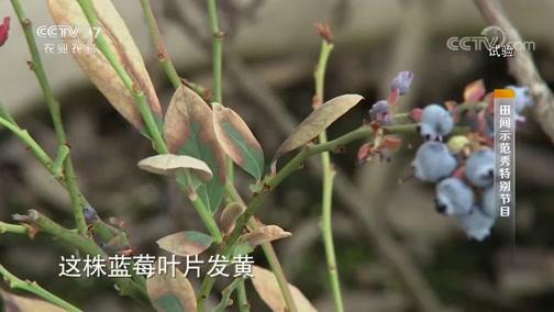 《田间示范秀》 20190909 对症施策种蓝莓