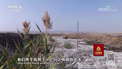 《走遍中国》 20190909 3集系列片《森林之城》(1) 戈壁变绿城