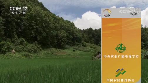 《田间示范秀》 20190920 鱼稻共生 庭院增收