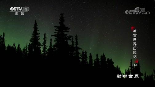 [动物世界]北极光的梦幻色彩在夜空中炫舞