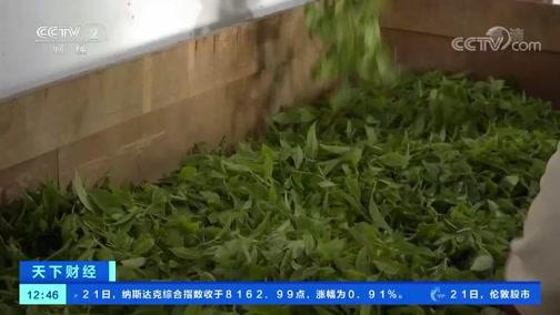 [天下财经]云南:古茶树稀少 将建立产品溯源体系