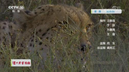 《自然传奇》 20191120 非洲狂野大猫