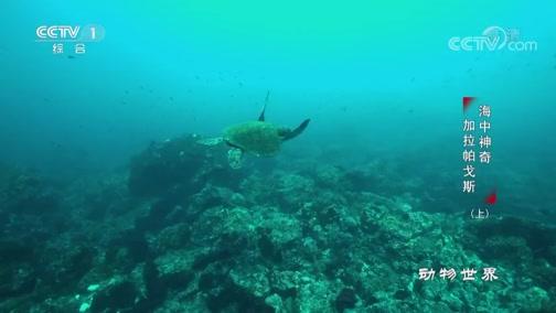 《动物世界》 20200105 海中神奇·加拉帕戈斯(上)