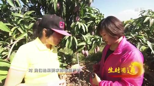 《生财有道》 20200116 芒果采收季 甜美好生意