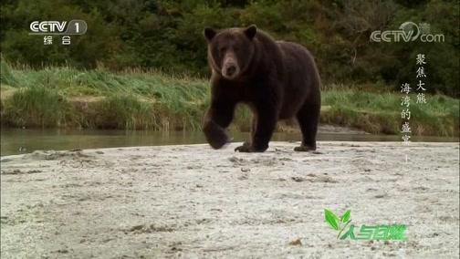 《人与自然》 20200203 聚焦大熊——海湾的盛宴(上)
