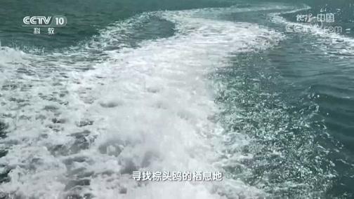 《地理·中国》 20200213 大自然的奇景 4