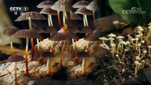 《人与自然》 20200224 地中海森林的春天