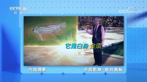 《地理·中国》 20200308 井底乾坤·鱼井奥秘