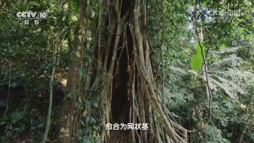 《地理·中国》 20200323 自然胜景·雨林探秘 1