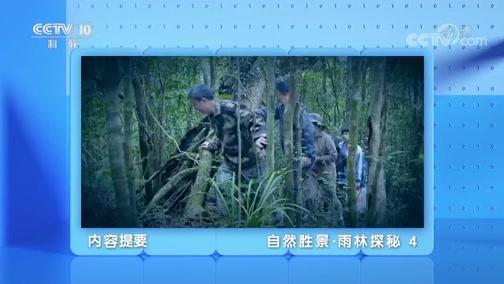 《地理·中国》 20200326 自然胜景·雨林探秘 4