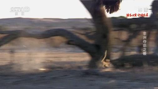 《自然传奇》 20200423 非洲夺命之最