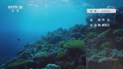 《自然传奇》 20200630 海洋的一天