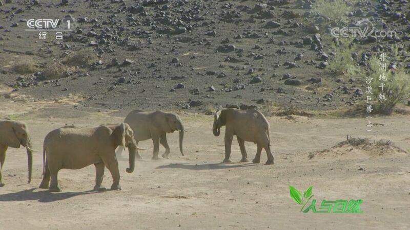 《人与自然》 20200828 非洲地平线——沙漠巨兽(上)