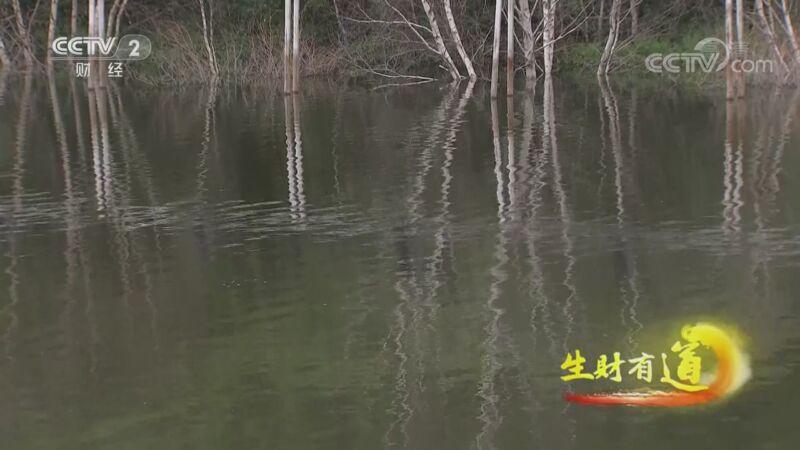 《生财有道》 20200904 生态中国草原行——一路风景一路财