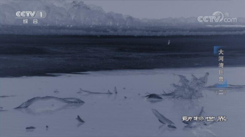 《动物世界》 20200910 大河湾巨兽(二)