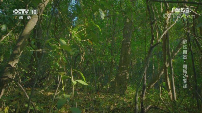 《自然传奇》 20200917 野性自然·哥斯达黎加